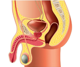 masaj penis și prostată marca penisului bogatyreva