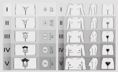 dimensiuni ale diferitelor penisuri stimularea mecanică a erecției