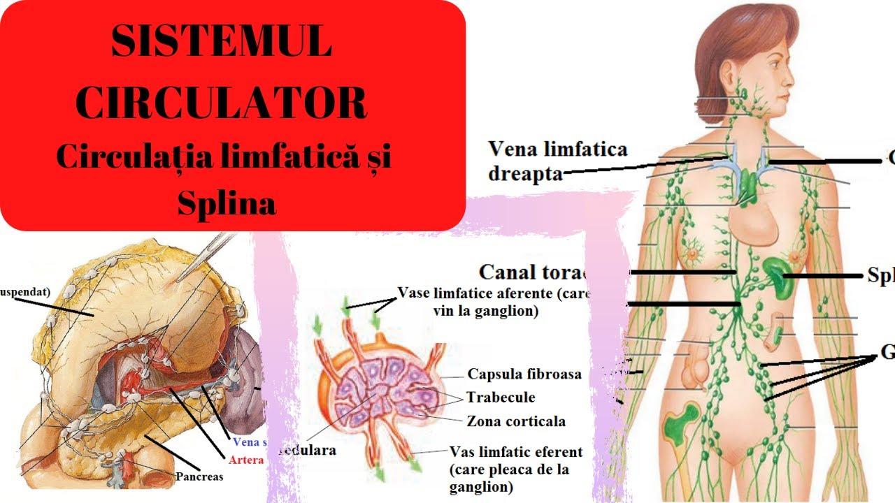 microsfere tratament varicoză foame medicale și varicoză
