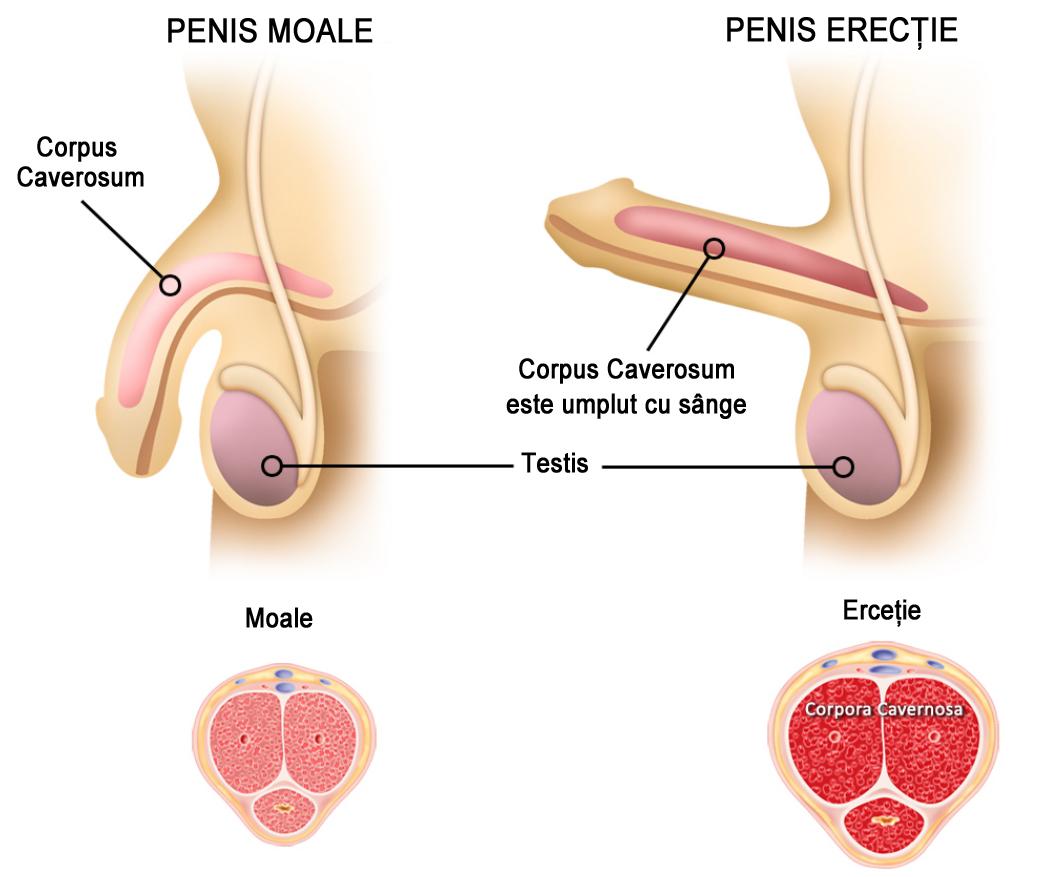 moale în timpul erecției din ceea ce bărbații pierd erecția