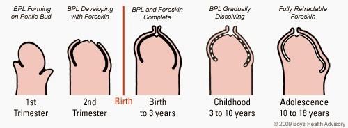 se introduce în penis din ce poate crește un penis