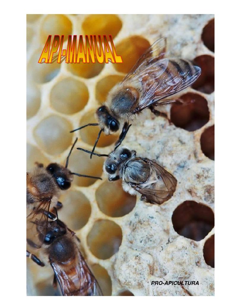 cum se mărește penisul de către albine