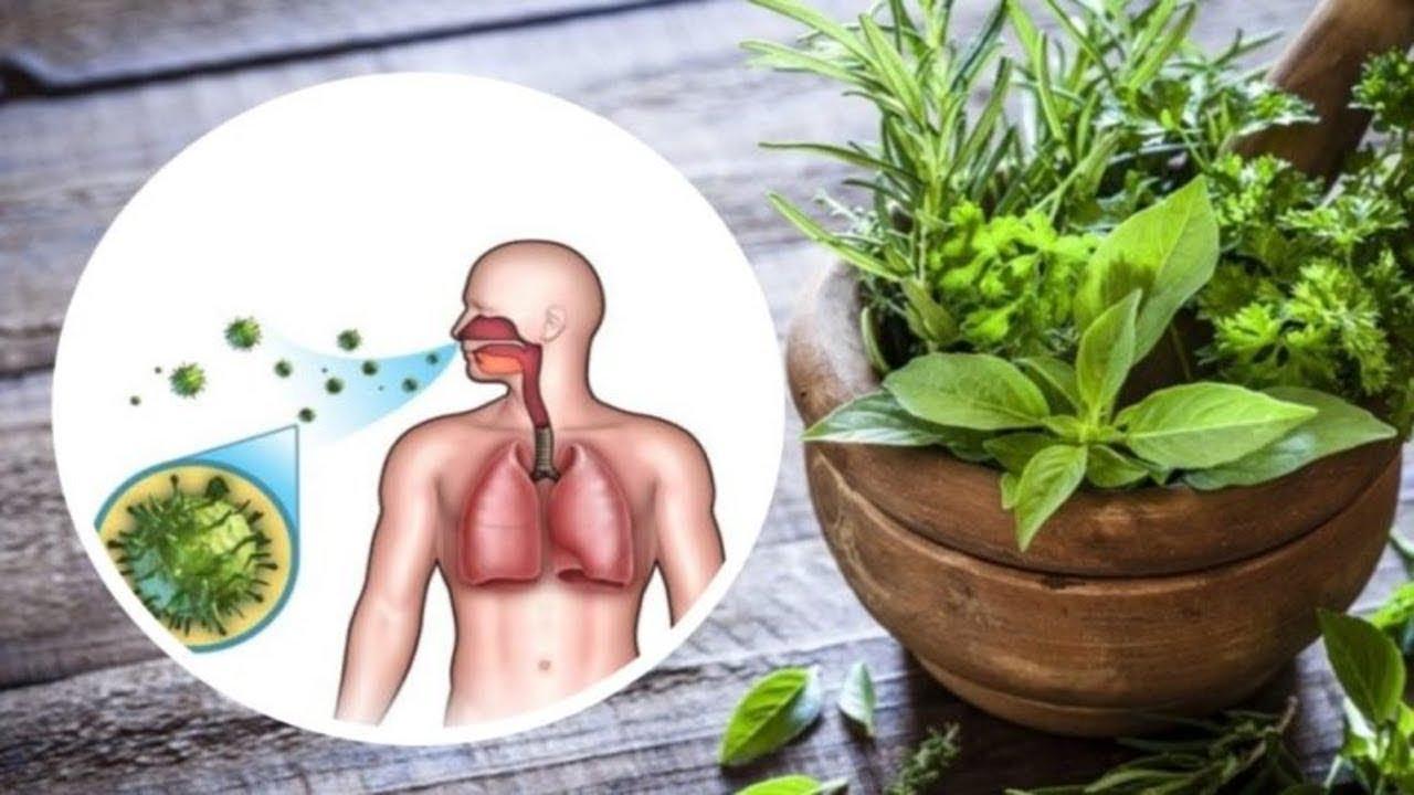 plante crescute de erecție erecție slabă dimineața ce să faci