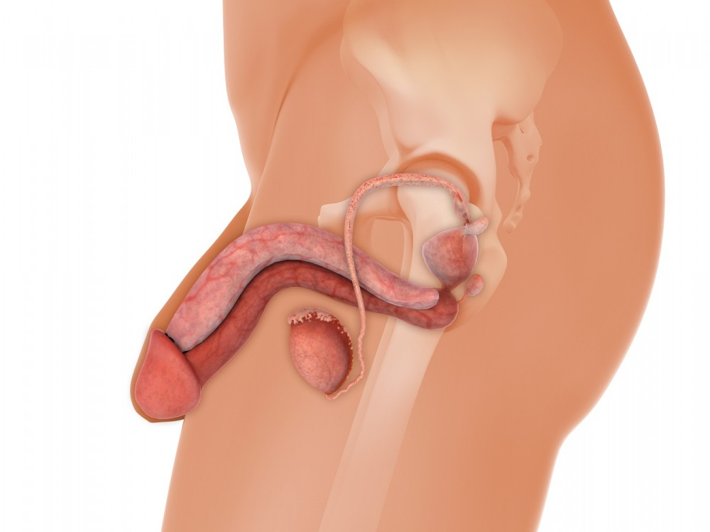 ce poate intepa penisul